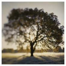Fine Art Photograph- The Joy Tree