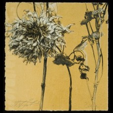 Flowers From Busch's II Pen and Ink Drawing Helen Gotlib Botanical